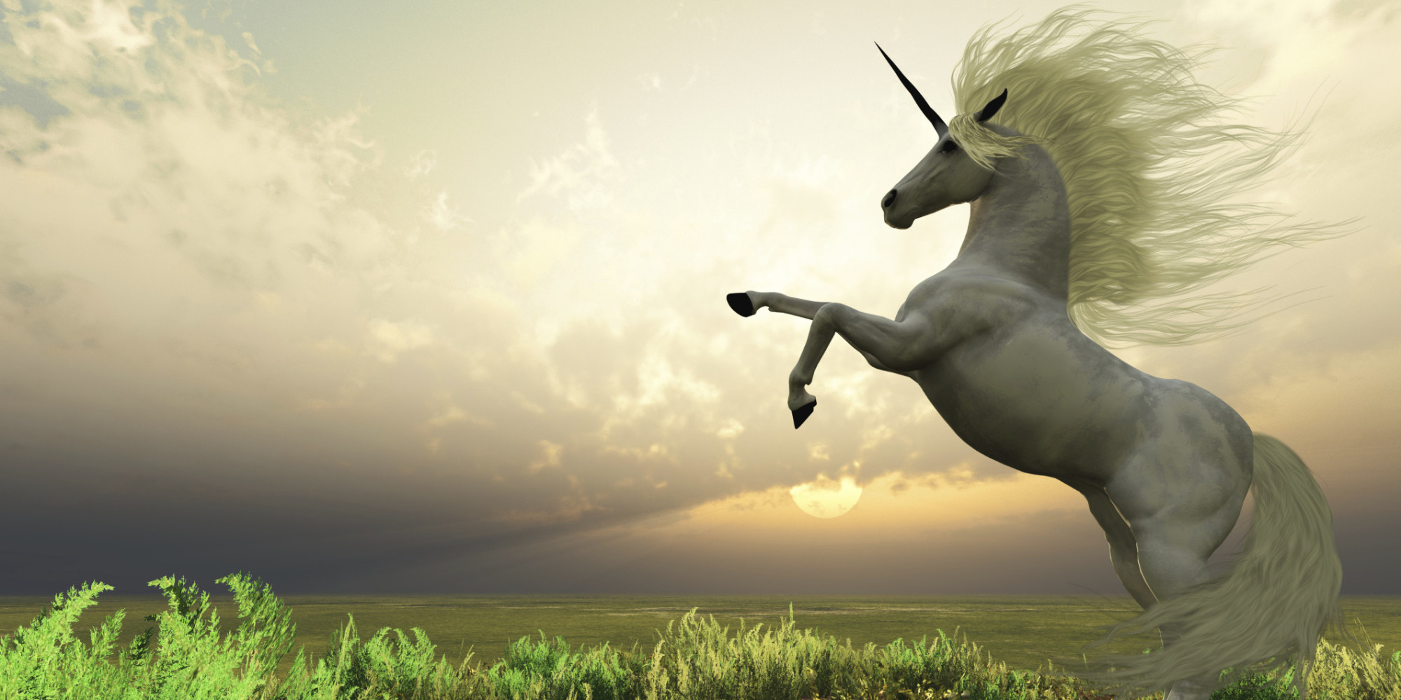 Unicorn Stag